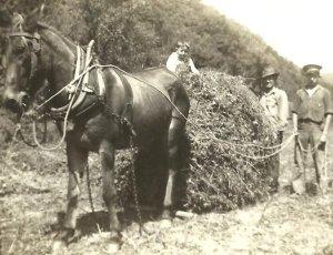 Big Harts Creek, Logan County, West Virginia, c.1938