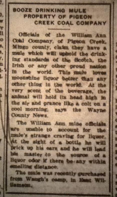 Booze Drinking Mule LB 03.25.1927