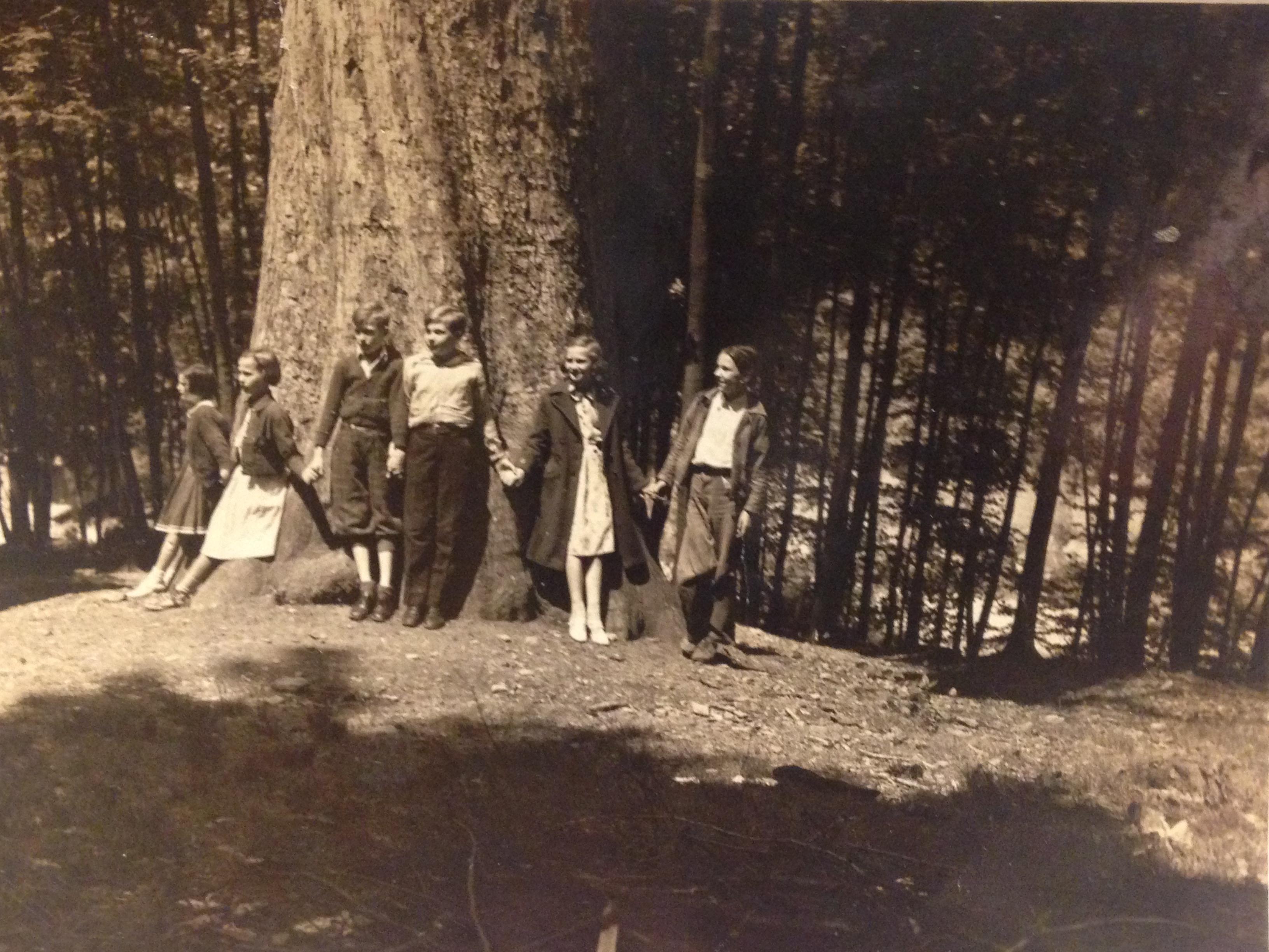 Big Tree at Lowe Mountain 1